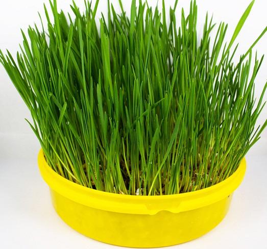 Как вырастить траву для своих животных?