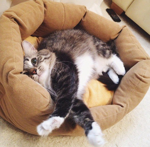 Где в рязани можно усыпить кота