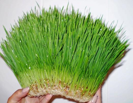 8 трав, которые можно вырастить на кухонном подоконнике 91