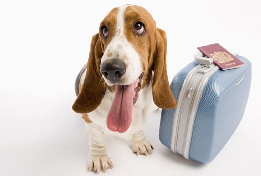 Как организовать путешествие с домашним питомцем?