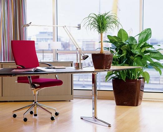 Как можно использовать комнатные растения в интерьере?