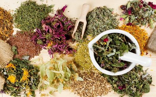 Можно ли принимать урологический сбор трав?