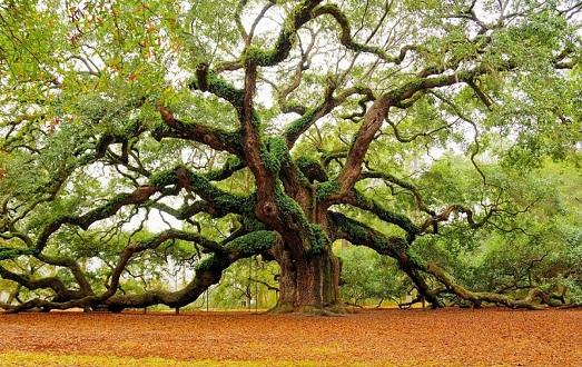 10 самых необычных и красивых деревьев в мире