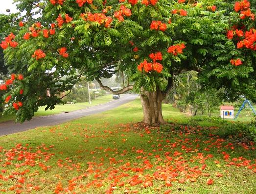 Секреты выращивания тюльпанного дерева