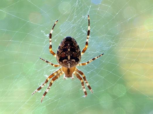 Что делать, если в доме завелись пауки?