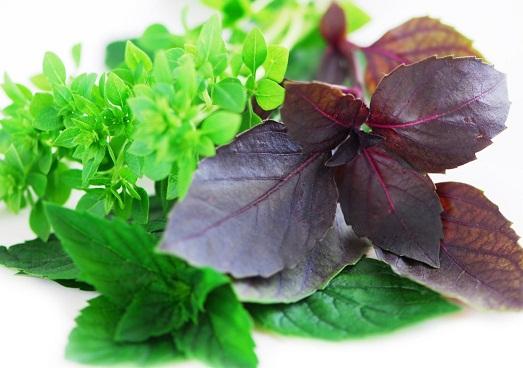 Как правильно выращивать ароматный базилик?