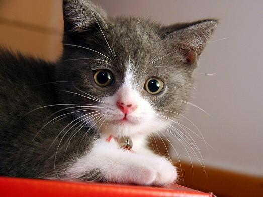 Почему у котов сухой нос