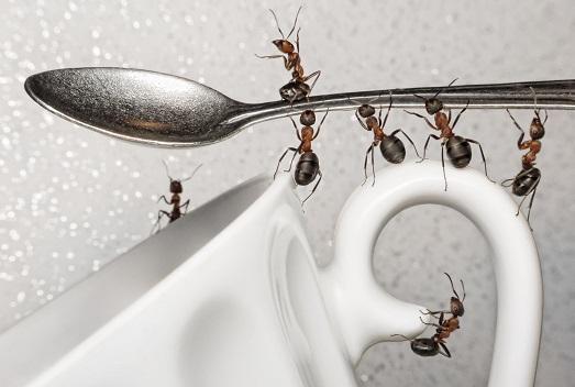 Избавляемся навсегда от ужасных муравьев в квартире