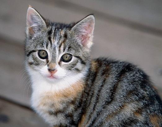Что означают черные точки у кошки?