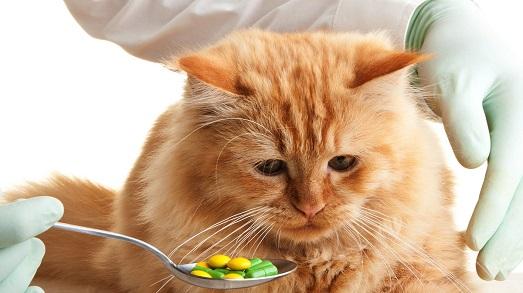 Самые распространенные кожные заболевания у кошек