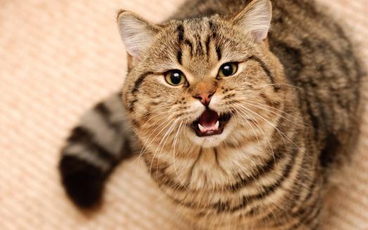 Что делать, если у животного проблемы со стулом?