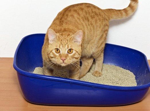 Какие бывают наполнители для кошачьего туалета?