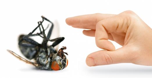 Надоели мухи в доме? Узнайте, как от них можно избавиться