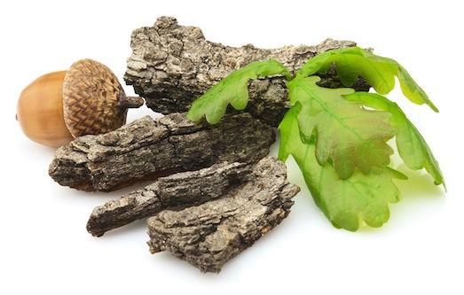 Применение и полезные свойства коры дуба для человека