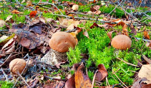 Как правильно собирать грибы в лесу?
