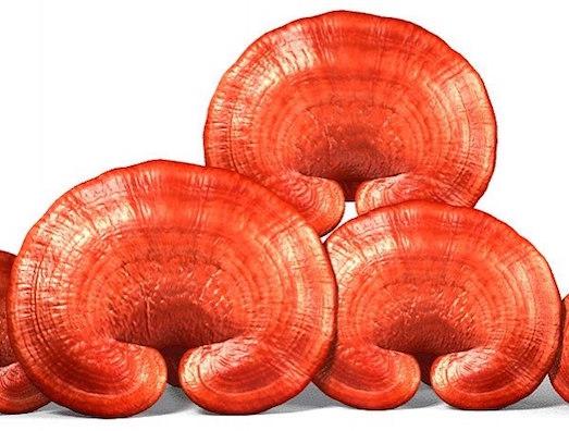 Применение необычного гриба рейши