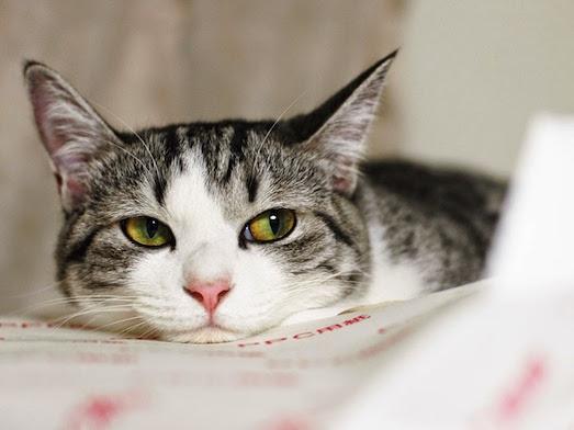 Как избавиться от неприятного запаха кошачьей мочи?