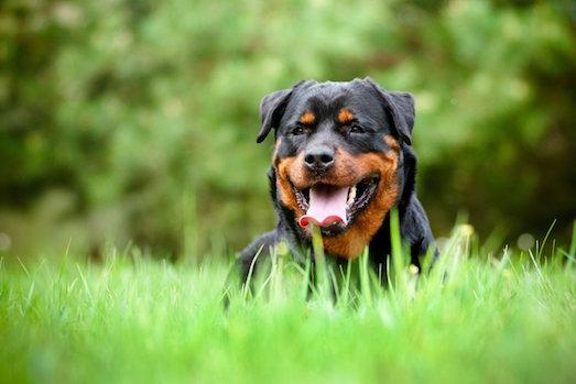 Как отучить свою собаку лаять без причины?
