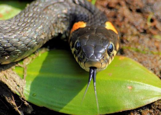 10 самых опасных в мире змей