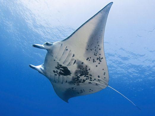 10 самых гигантских рыб в мире