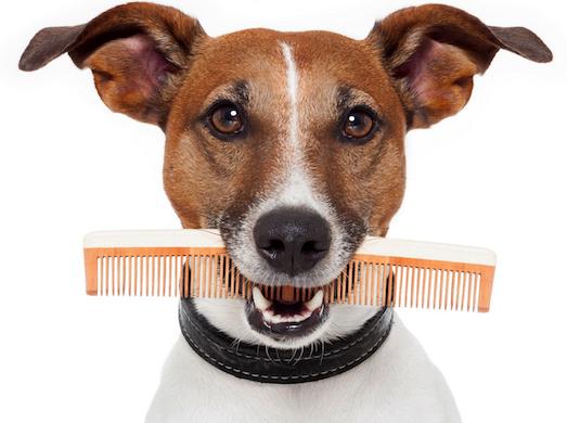 Какие бывают расчески для собак?