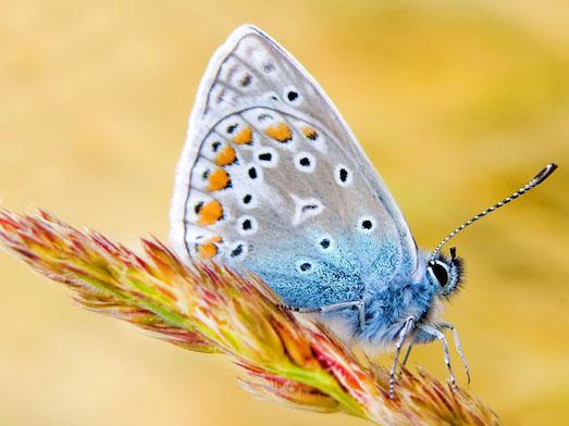 Секреты разведения бабочек в домашних условиях
