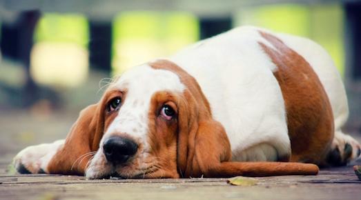 Из-за чего у собаки урчит живот?