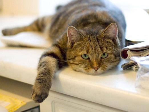 Нормы температуры у кошек