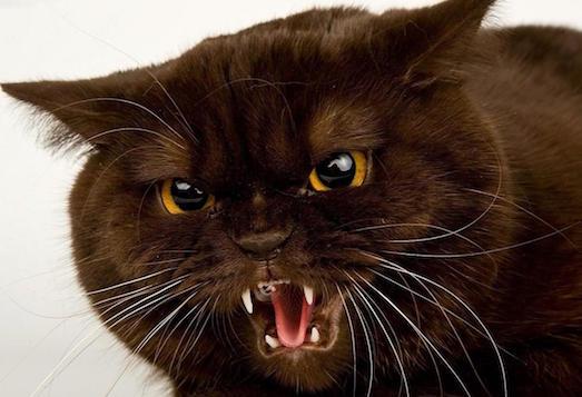 Почему мы боимся кошек и что с этим делать?