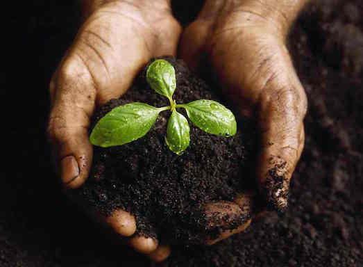 Натуральное удобрение своими руками