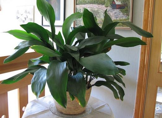 - Suitable indoor plants ...