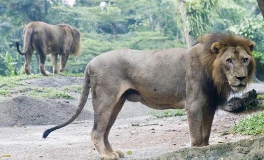 Топ 10 самых классных зоопарков в мире