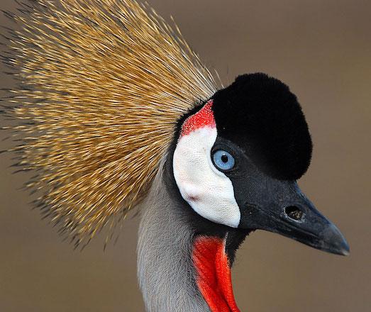 10 самых красивых и интересных птиц в мире