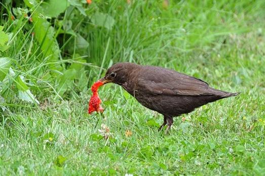 Как защитить огород от птиц?
