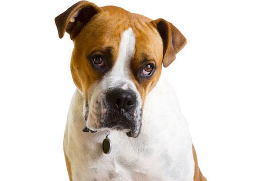 Причины покраснения глаз у собак