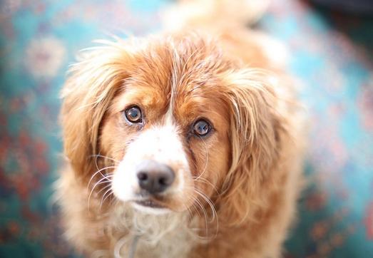 Причины и симптомы демодекоза у собак