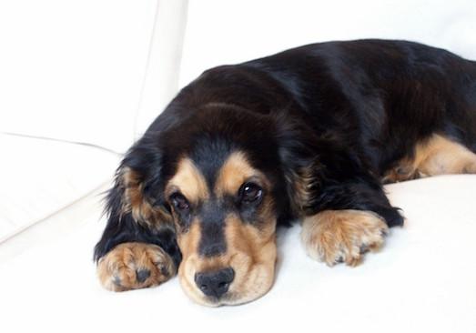 Симптомы и лечение клещевого энцефалита у животных