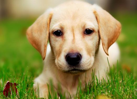 Как долго живут собаки?