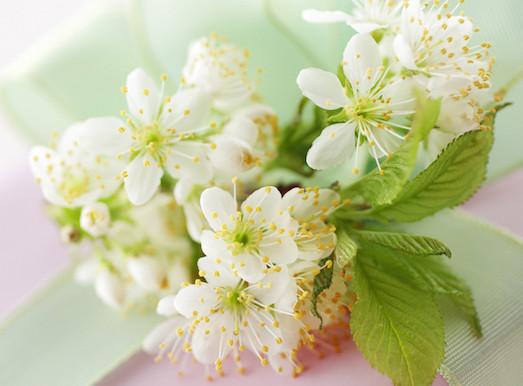 Какими свойствами обладают цветки жасмина?