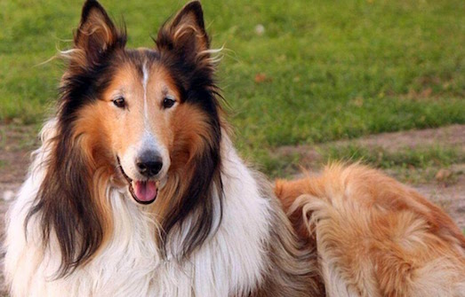Топ 10 самых интересных фильмов о собаках