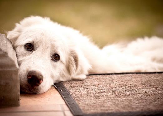 Что делать, если ваша собака постоянно скулит?