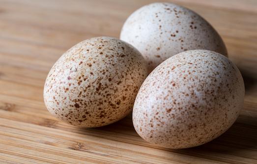 Индюшиные яйца — полезный или опасный продукт?