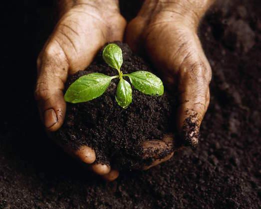Какие бывают виды цветочного грунта?