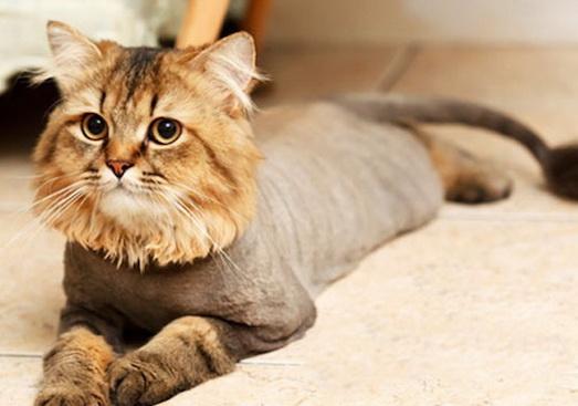 Основные моменты в стрижке кота