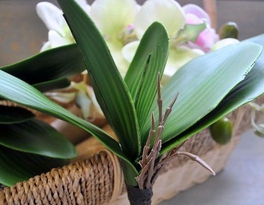 Вянут листья у орхидеи
