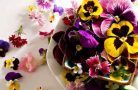 Какие цветы можно есть?
