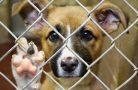 Домашнее животное из приюта: за и против