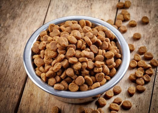 Симптоми харчової алергії у домашніх тварин