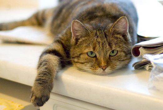 Почему кот перестал есть