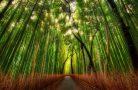 Топ 10 самых красивых лесов в нашем мире
